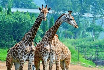 【付家庄滨海路商圈】大连森林动物园-美团