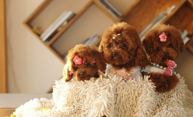 宠物宝宝单月寄养,仅售299元!价值600元的单月寄养1次,提供免费WiFi。