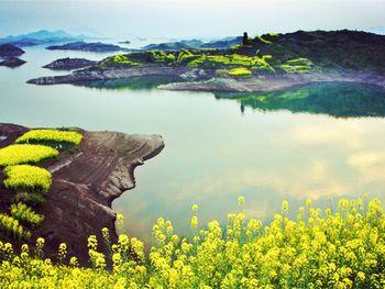 【杭州出发】千岛湖龙川湾、千岛湖无自费1日跟团游*送中餐 千岛湖一日游-美团