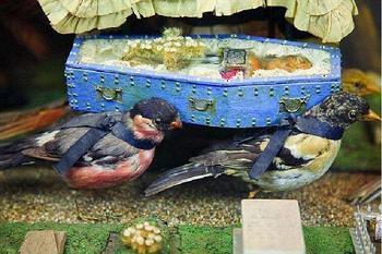 【滨海学院】青岛滨海学院世界动物自然生态博物馆门票双人票-美团