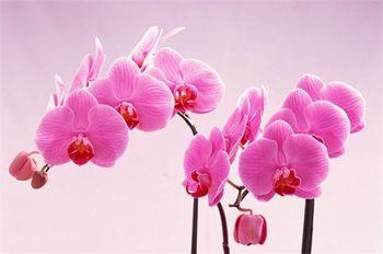 【草桥/公益西桥】北京世界花卉大观园侏罗纪恐龙展门票(成人票)-美团