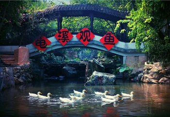 【佛冈县】金龟泉生态度假村温泉门票成人票-美团