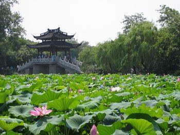 【上海出发】西湖、乌镇、千岛湖等2日跟团游*杭州千岛湖乌镇三日游-美团