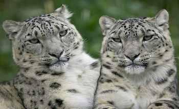 【城西区】青藏高原野生动物园票+欢乐谷5项目套票成人票-美团