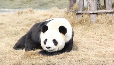 【阆中市】阆中熊猫乐园门票(双人票)-美团