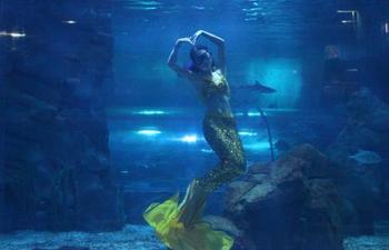 【大东海度假区】大东海梦龙海洋馆-美团