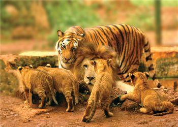 【秀英区】海南热带野生动植物园门票成人票-美团