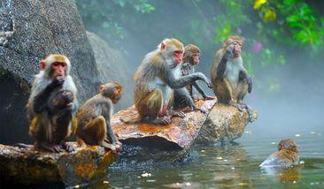 【陵水县】南湾猴岛门票+往返缆车或轮渡2选1 (成人票)-美团