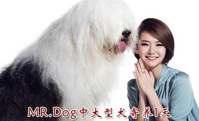 MR.DOG宠物店中大型犬寄养1天,仅售30元!价值50元的中大型犬寄养1天1次,提供免费WiFi。