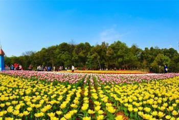 【天际岭】湖南省森林植物园-美团