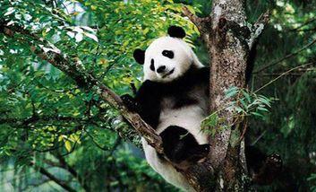 【休宁县】黄山大熊猫主题乐园门票(成人票)-美团