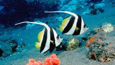 【鼓浪屿】厦门海底世界-美团