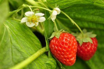 【长沙出发】周洛大峡谷纯玩1日跟团游*赏花、摘草莓、抽大奖-美团