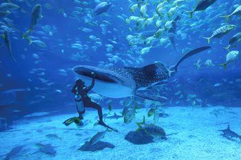 【滨海路】烟台海昌鲸鲨海洋公园门票双人票-美团