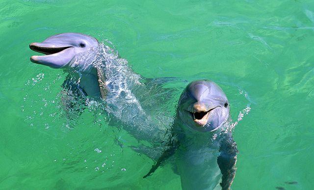 海口出发分界洲岛+海豚湾纯玩一日游