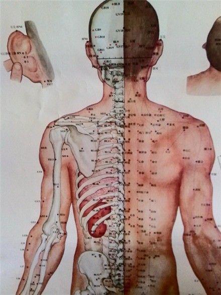 肚脐周围结构图