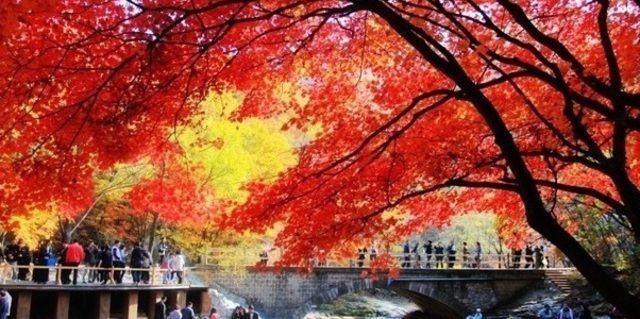 沈阳枫叶校园风景