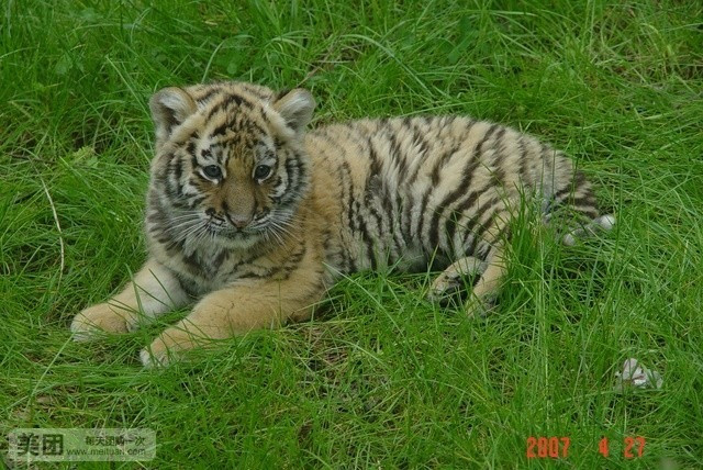 贵阳森林野生动物园
