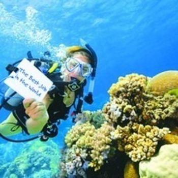 【大东海度假区】大东海堡礁潜水-美团
