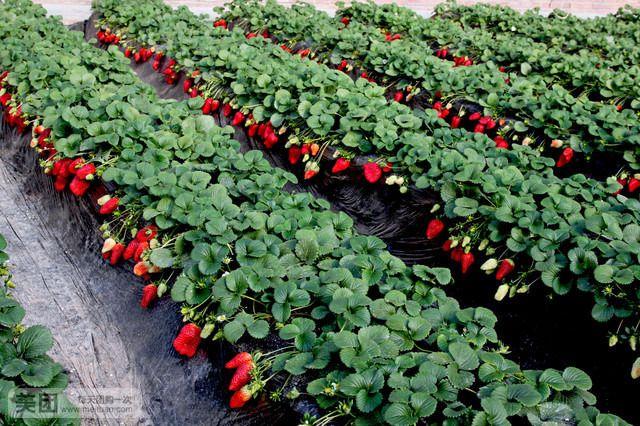 莓好乐园(北辛店街店)