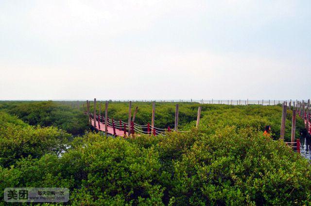 【北京金海湾红树林风景区门票团购】金海湾红树林区