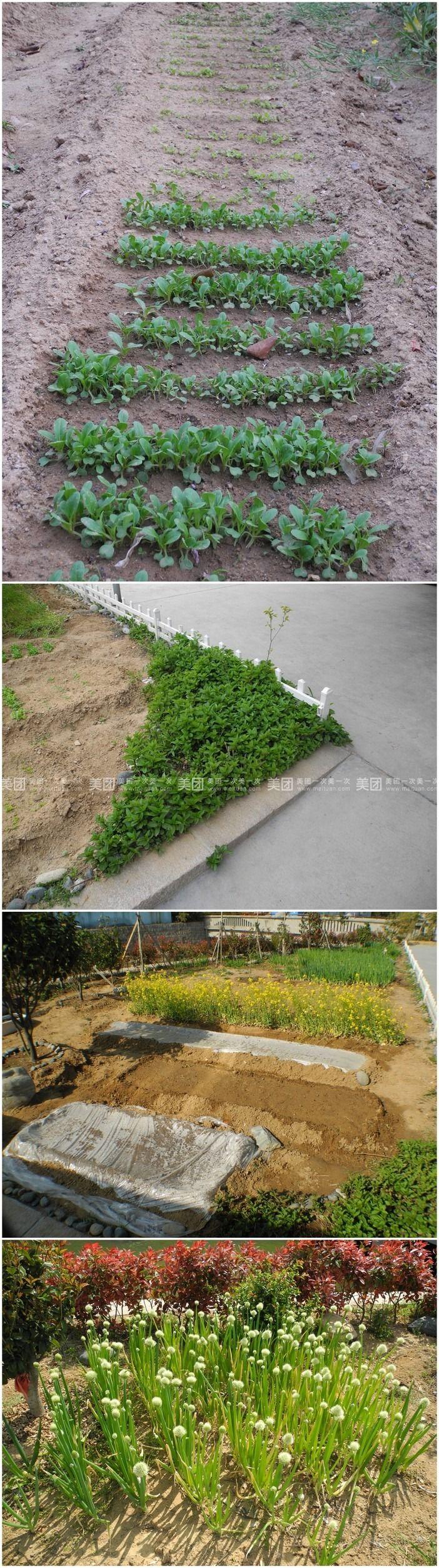 美食团购 鲁菜/北京菜 崂山区 崂山风景区 贵宾农家宴