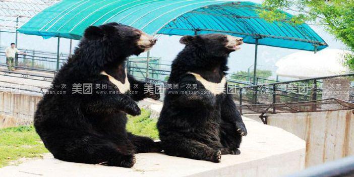 济南跑马岭野生动物园一日游