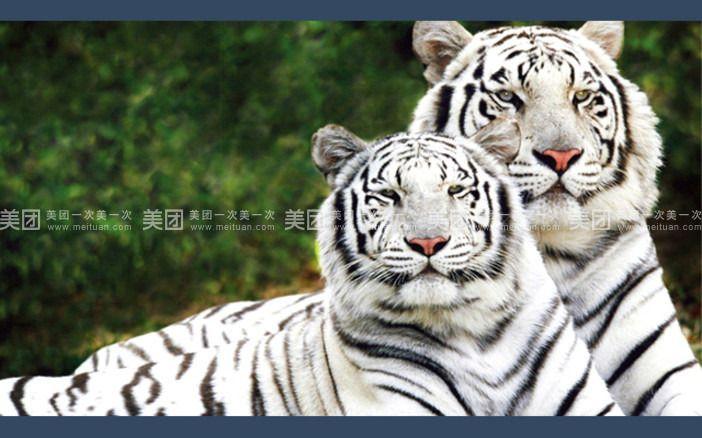 香格里拉 淹城野生动物园夜公园 双人2天1晚自由行