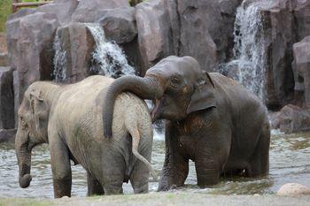 【浦东新区】上海野生动物园门票+VIP2区马戏票(下午场)成人票-美团