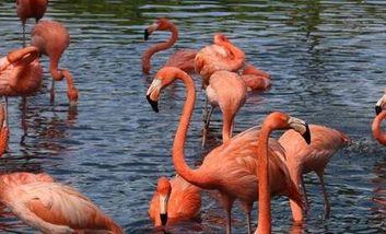【澄迈县】富力红树湾湿地公园门票(双人票)-美团