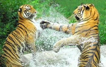 【西丽】深圳野生动物园-美团