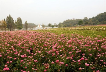 【合兴镇】森禾金沙洲玫瑰园双人票-美团