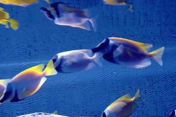 【大丰市】大丰港海洋世界-美团