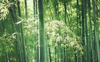 【东港区】日照竹洞天风景区-美团