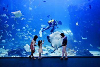 【其它】南昌万达海洋乐园+万达电影乐园飞越江西【周末节假日联票】成人票-美团