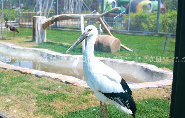 【北京龙沙动植物园团购】成人门票团购|价格|图片