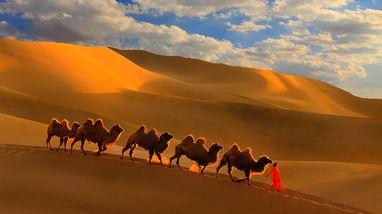【乌鲁木齐出发】库木塔格沙漠、吐鲁番博物馆1日跟团游*赠送干果小礼品-美团