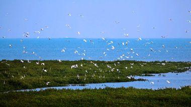 【银海区】北海金海湾红树林生态旅游区亲子票(2大1小)含观光车-美团