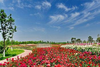 【大兴区】北京爱情海玫瑰文化博览园儿童票-美团