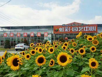 【栖霞区】虹彩花卉博览园-美团
