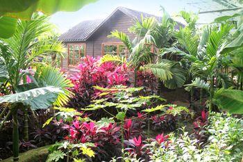 【大兴区】呀路古热带植物园恐龙主题馆门票(成人票)-美团