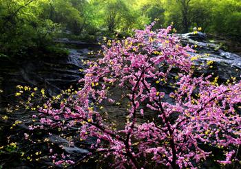 【户县】太平国家森林公园旺季成人票-美团