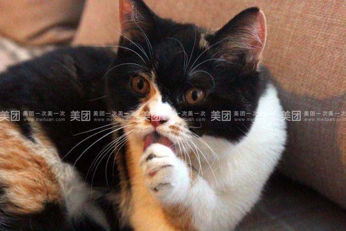 【银川喵先森猫咪主题咖啡馆团购】喵先森猫咪主题馆