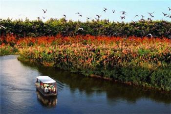 【百万葵园/十九涌】南沙湿地公园门票双人票-美团