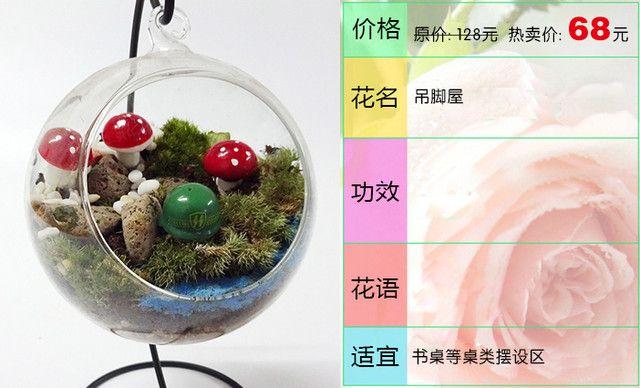 :长沙今日团购:【燕姿花艺】吊脚屋绿植盆栽办公室内桌面防辐射绿色植物1盆,提供免费WiFi