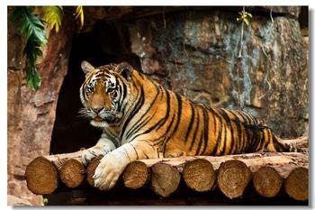 【其它】秦皇岛野生动物园+圣蓝海洋公园(成人票)-美团