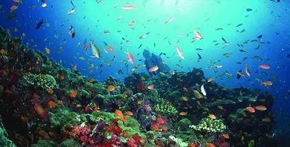 【亚龙湾】亚龙湾海底世界豪华游船环海游(成人票)-美团