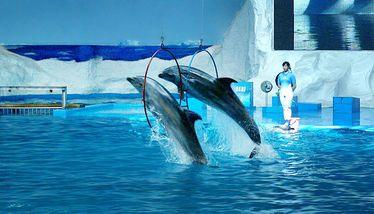 【极地海洋世界】青岛极地海洋世界极地馆+欢乐剧场+深海奇幻(2大1小亲子票)-美团