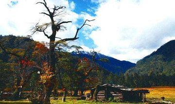 【拉萨出发】巴松措景区、雅鲁藏布大峡谷、尼洋阁等纯玩3日跟团游*醉美林芝、南迦巴瓦峰-美团