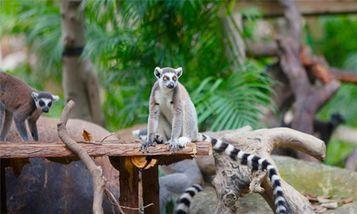【番禺区】广州长隆野生动物世界-美团